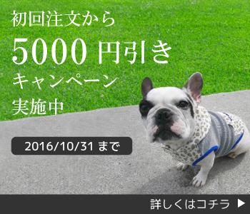 初回注文から5000円割引キャンペーン